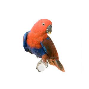 Τροφή για παπαγάλους
